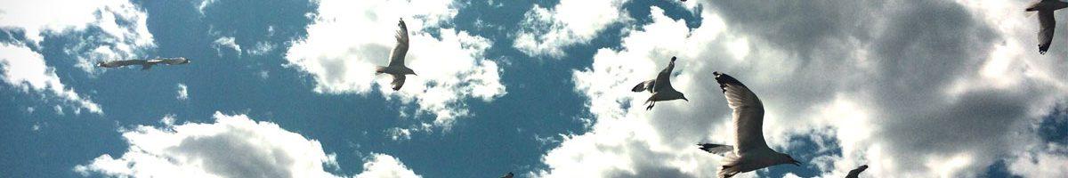 Quand les goélands apportent un éclairage sur la pollution atmosphérique, prise par Manon Sorais